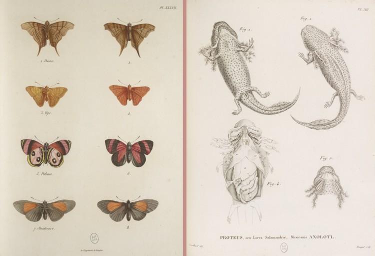 Alexander von Humboldt, Aimé Bonpland - Recueil d'observations de zoologie et d'anatomie comparée (1811-1833)