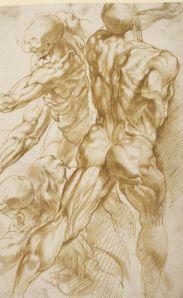 Estudios anatómicos de Rubens