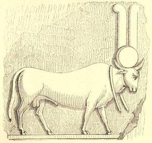 voltaire-white-bull