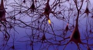 Diferentes aspectos del impacto de la lectura sobre la memoria y el cerebro