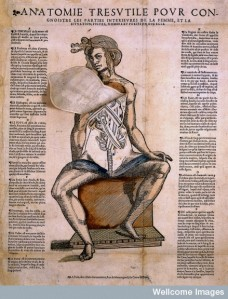 Lámina anatómica animada del siglo XVI