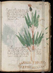 Una página del Manuscrito Voynich