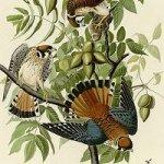 1 – De Aristóteles a Darwin : una historia natural