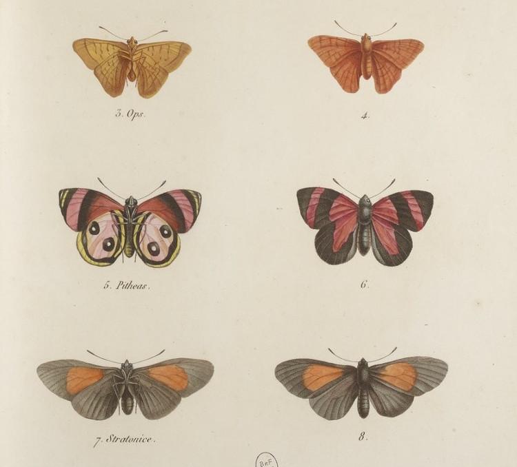 humboldt-recueil-1-750px