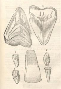 Ulisse Aldrovandi - Museum metallicum (1648)