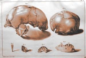 Philippe-Charles Schmerling - Recherches sur les ossements fossiles dans les cavernes de la province de Liège (1833-1834)