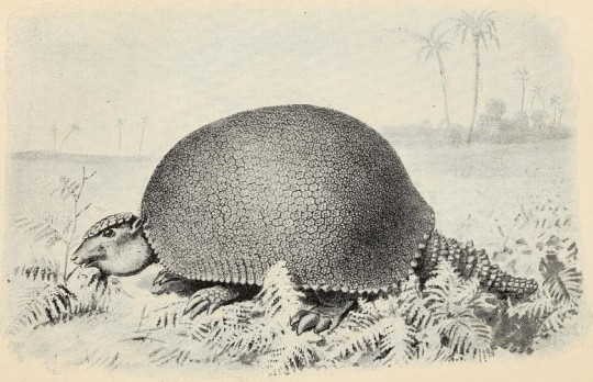 Henry Neville Hutchinson – Extinct monsters : a popular account of some of the larger forms of ancient animal life (1893)