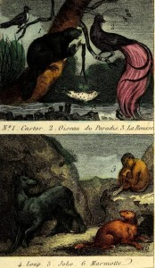 Georges-Louis Leclerc de Buffon - Le petit Buffon des enfants (1847)