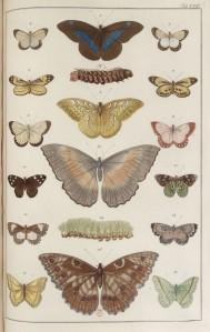 Albertus Seba - Locupletissimi Rerum Naturalium Thesaurus (1734-1765)